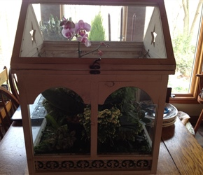 Wardian Case with live plants for Silent Auction