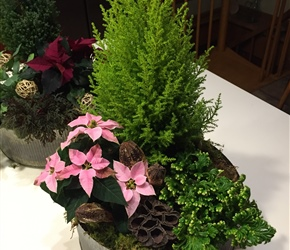 Mini-poinsettias, lemon cypress and frosty fern make for a fresh combination