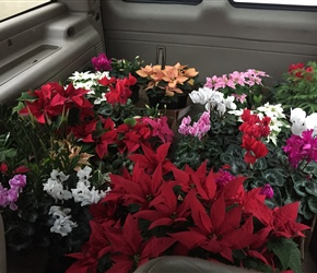 Live plants from Gumto's Greenhouse fill the car.