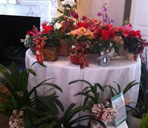 Live plants bowed and potted for gift giving